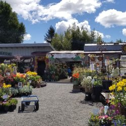 Photo Of King S Nursery Santa Rosa Ca United States Welcome To Their