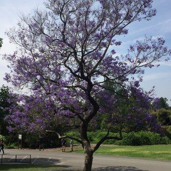 Los Angeles County Arboretum And Botanic Garden 3669 Photos 622 Reviews Botanical Gardens