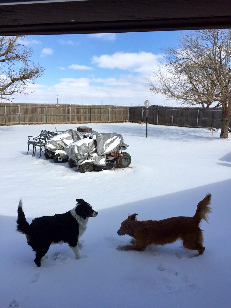 Hill Veterinary Service: 102 16th St, Abernathy, TX
