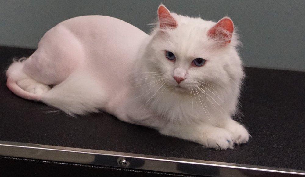 The Cat's Meow: 2607 S 11th St, Niles, MI