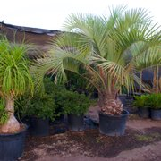 Lopez Nursery 26 Photos Nurseries Gardening 4257