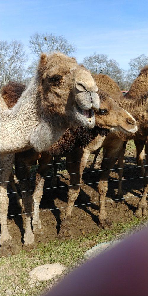 Pettit Creek Farms: 337 Cassville Rd, Cartersville, GA