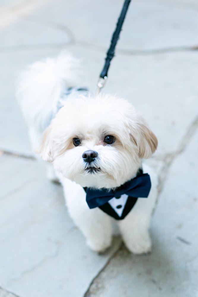 Oh My Dog!: 1461 Beach Park Blvd, Foster City, CA