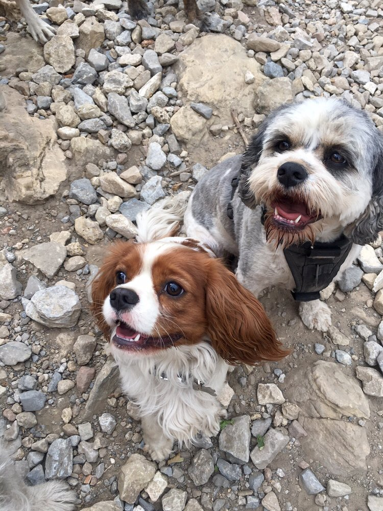 Loving Your Pets: 7493 S Stone Rd, Cottonwood Heights, UT