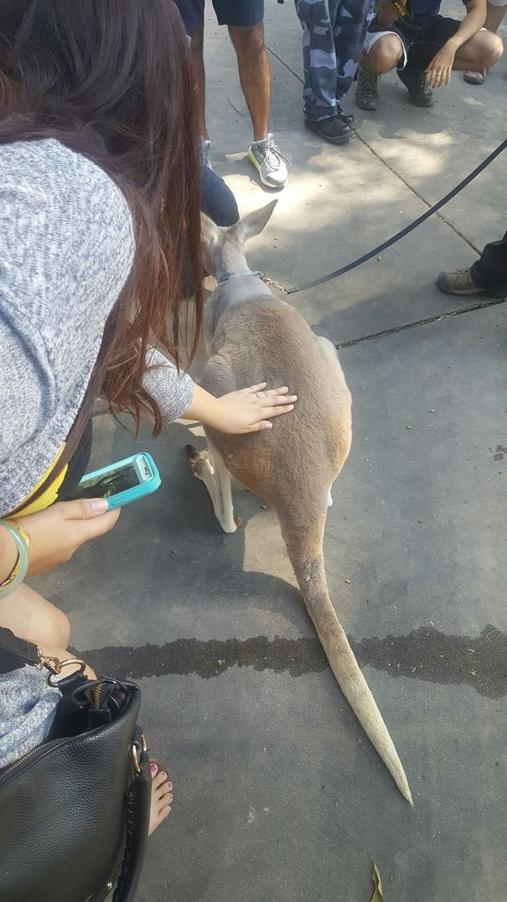 Petting A Kangaroo On The Animals In Action Experience Yelp