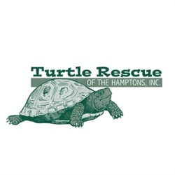 Turtle Rescue Of The Hamptons - 2019 All You Need to Know