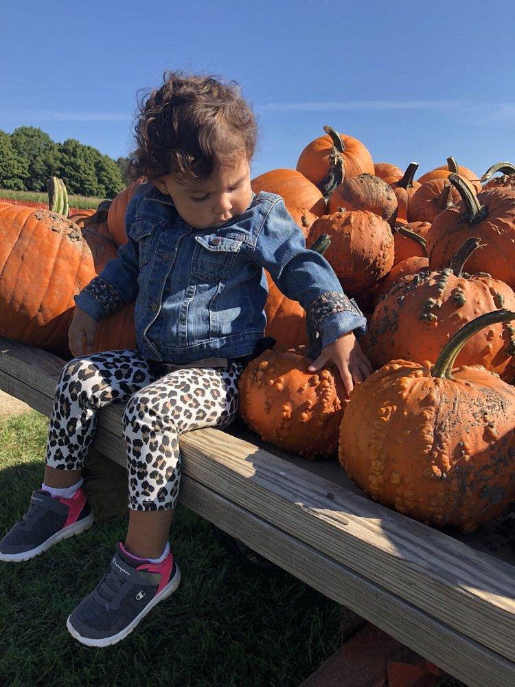 Spieker's Pumpkin Farm: N1181 Hwy 57, Random Lake, WI