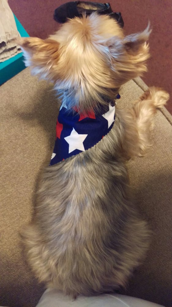 Cheap dress alteration singapore kennel