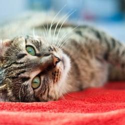 PetFirst Pet Insurance - 32 Reviews - Pet Insurance ...