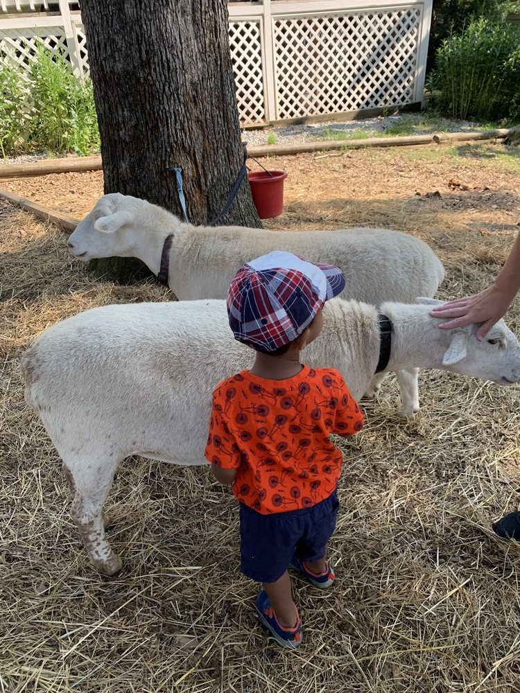 Farmer Sue & The Art Barn at Morning Glory Farm