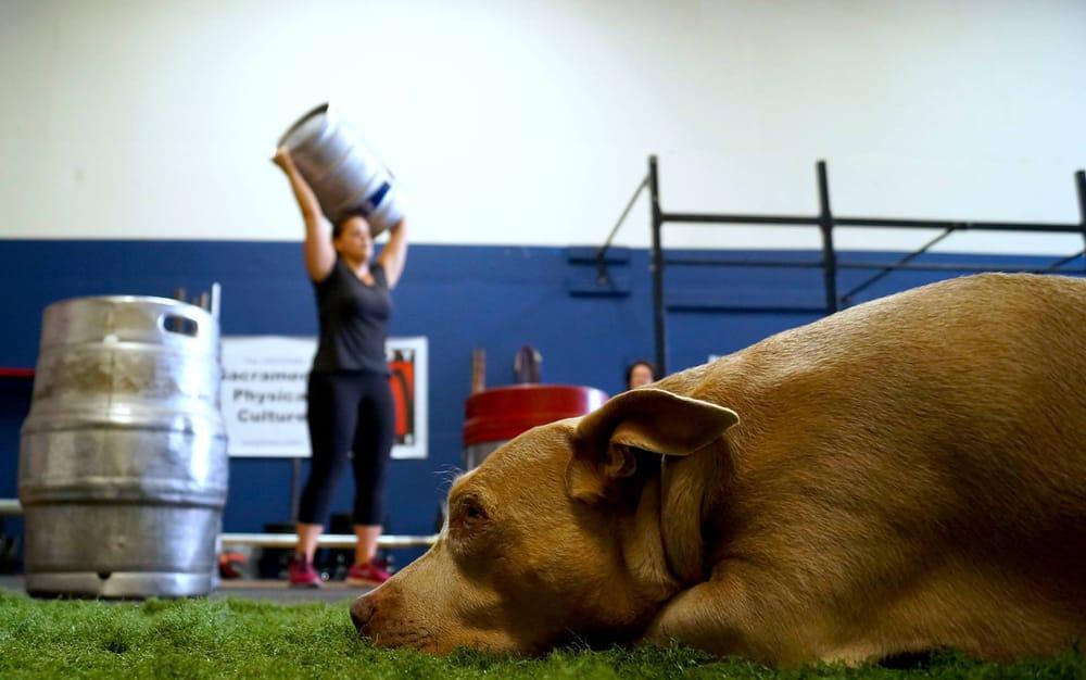 BodyTribe Fitness