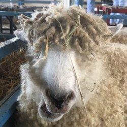 NYS Sheep & Wool Festival - Festivals - 6550 Spring Brook