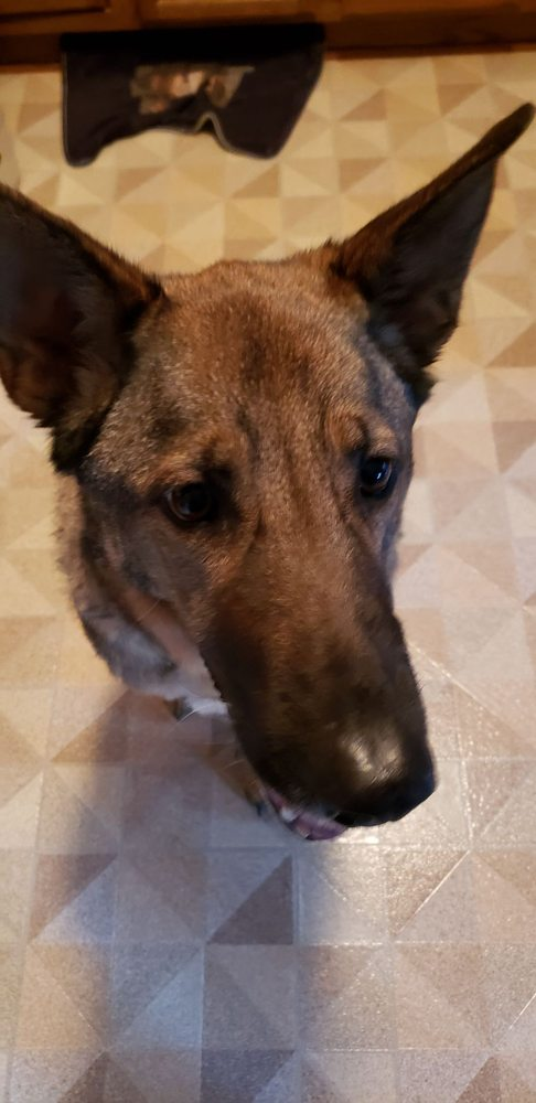 Right At Home Pet Sitting: Delafield, WI