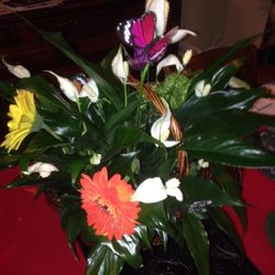 Photo of Royer's Flowers - Lancaster North, PA, United States