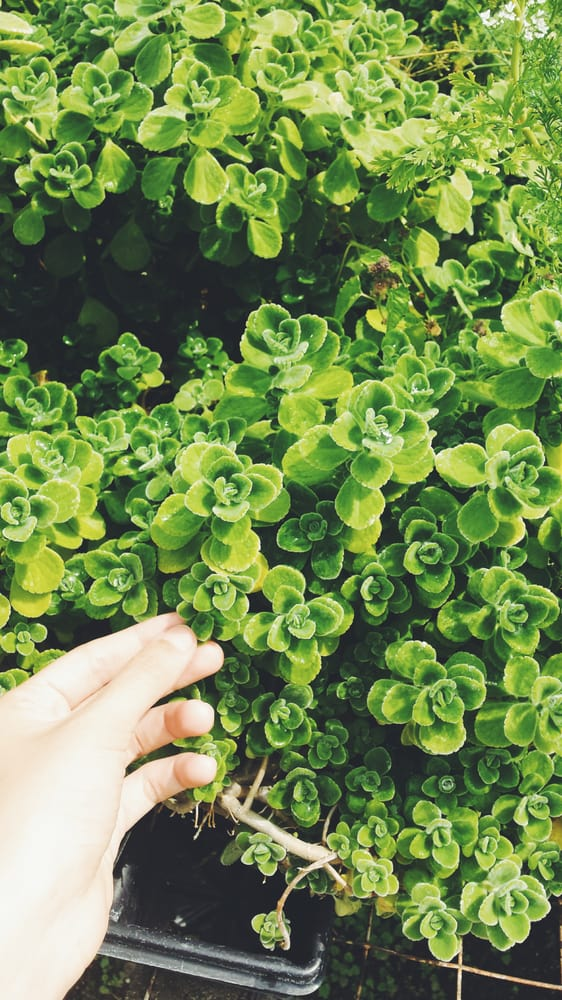 Sunny Hill Greenhouses & Nursery: 1510 Ridgeway Rd, Canon, GA