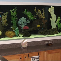 Photo Of Living Art Aquatics   Cary, IL, United States. Saltwater Aquariums  By