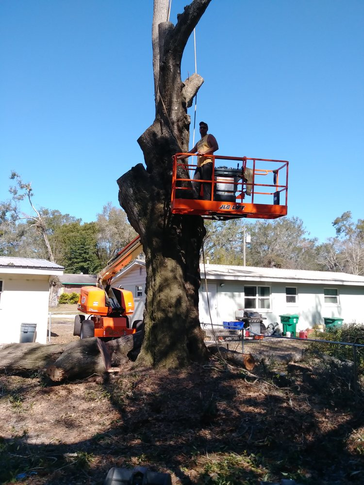 Hoptons Tree Service: Lake Helen, FL