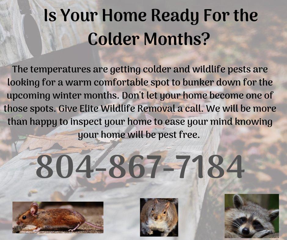 Elite Wildlife Removal: Colonial Beach, VA