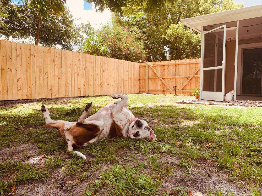 "Andrew Ryan Outdoor Design, ""The Fence Guy"": Seminole, FL"