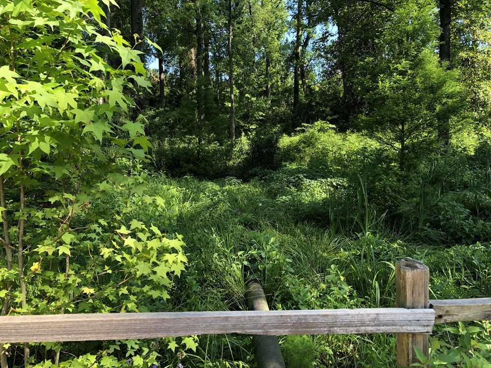 Billie's Butterfly Garden: N Augusta Greeneway, Belvedere, SC
