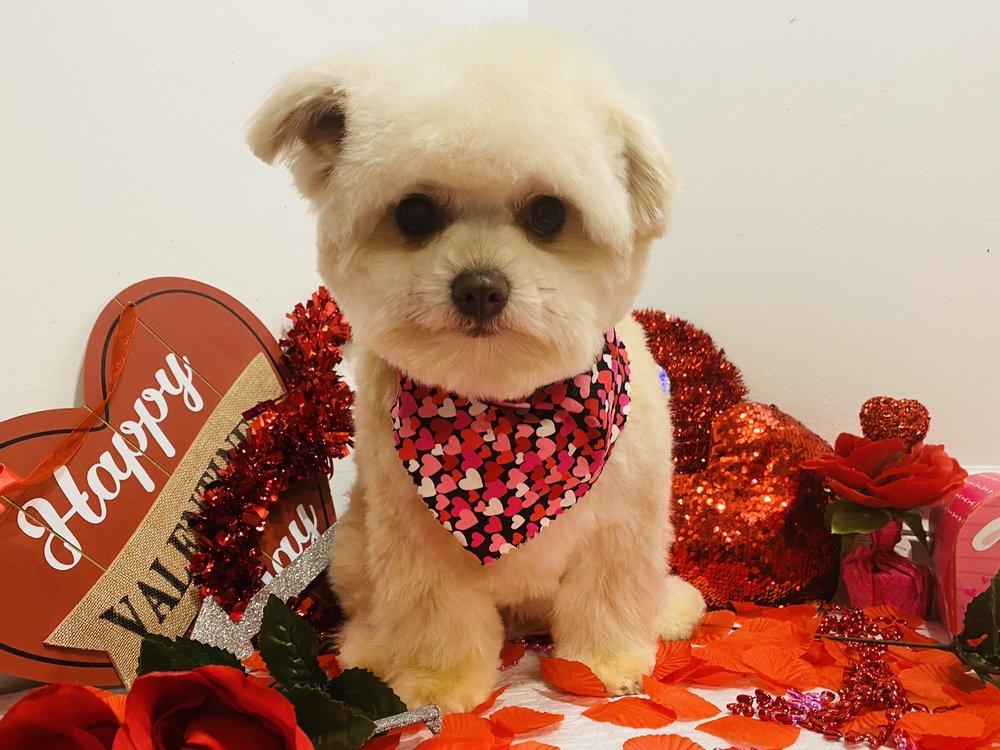 Pampered Puppy