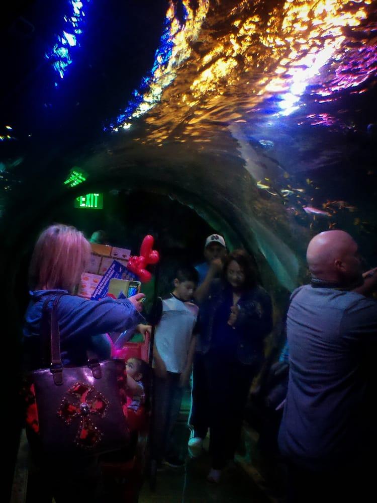 Photos for SEA LIFE Grapevine Aquarium - Yelp