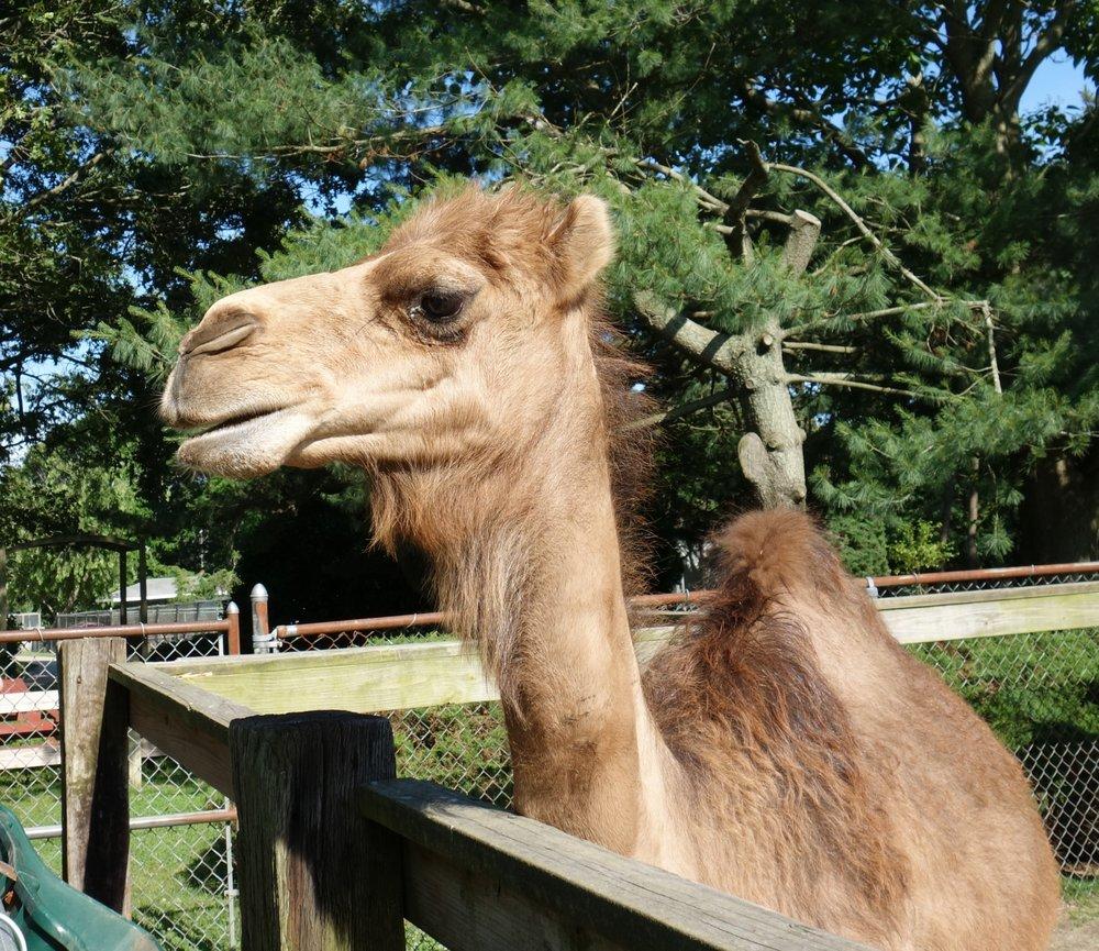 Animal Farm Petting Zoo: 296 Wading River Rd, Manorville, NY