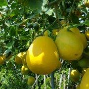 Paradise Nursery 14 Photos 21 Reviews Nurseries Gardening