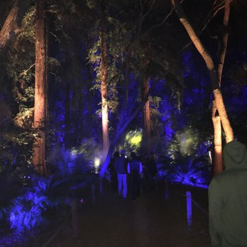 Enchanted Forest Of Light At Descanso Gardens 771 Photos 74 Reviews Local Flavour 1418