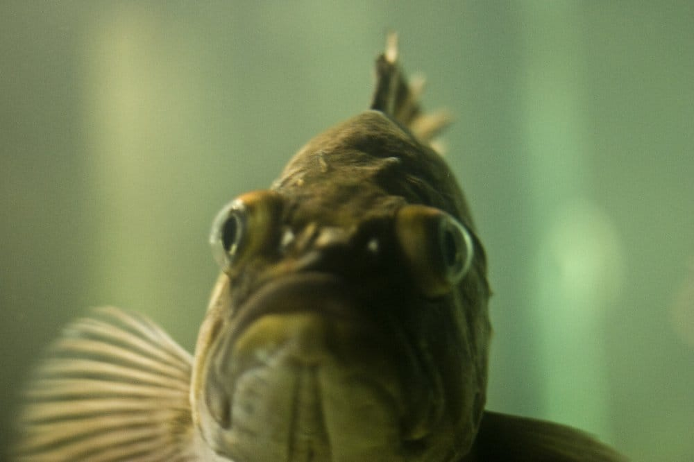 Grumpy fish is grumpy yelp for Grumpy s fishing report