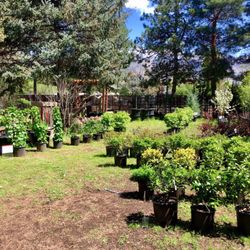 Photo Of Homestead Nursery Salt Lake City Ut United States Bushes And