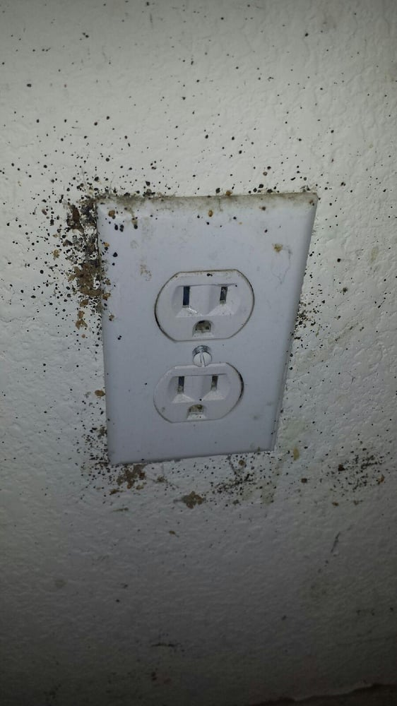 Bed Bugs Can Hide In Wall Outlets Under The Switch Plate