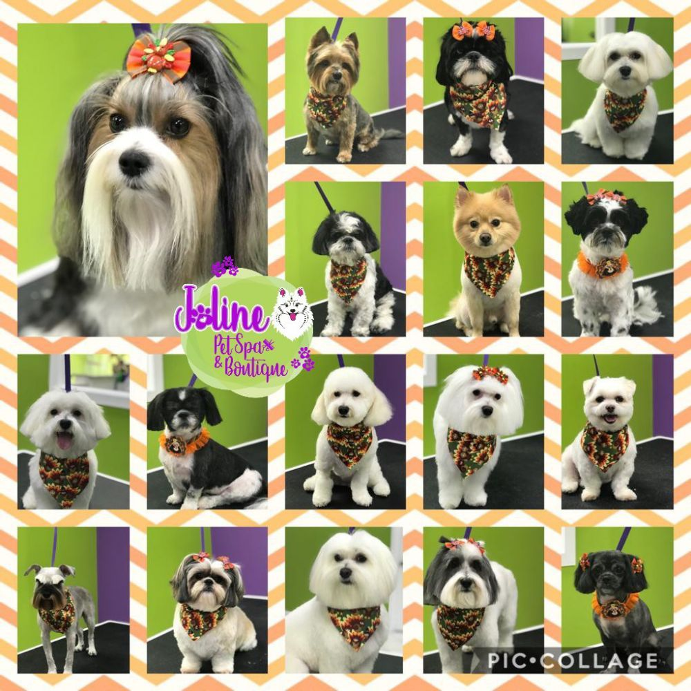 Joline Pet Spa & Boutique: 222 Harrison Ave, Harrison, NJ