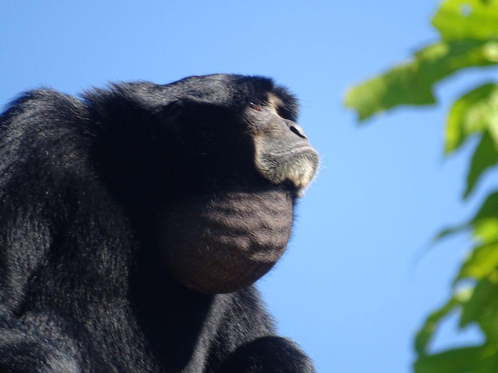 Social Spots from Cincinnati Zoo