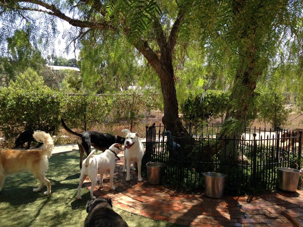 Dog Days Ranch