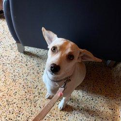 VCA Foothill Veterinary Hospital - 25 Photos & 192 Reviews