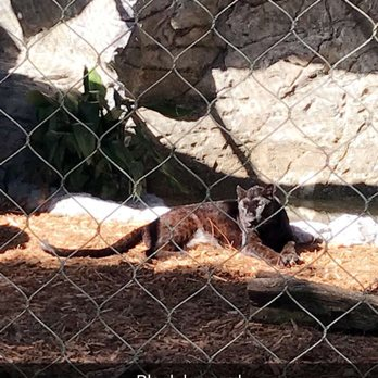 Photo Of Central Florida Zoo U0026 Botanical Gardens   Sanford, FL, United  States.