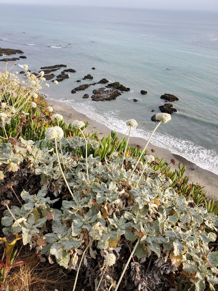 Panther Beach: 10 Miles Hwy 1 N, Santa Cruz, CA