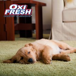 Photo of Oxi Fresh Carpet Cleaning - York, PA, United States ...