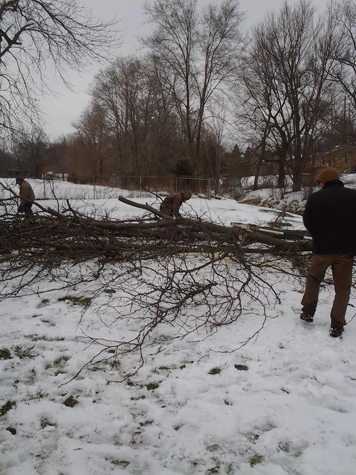 D&E Tree Removal Trimming and Shaping: Arcadia, IN