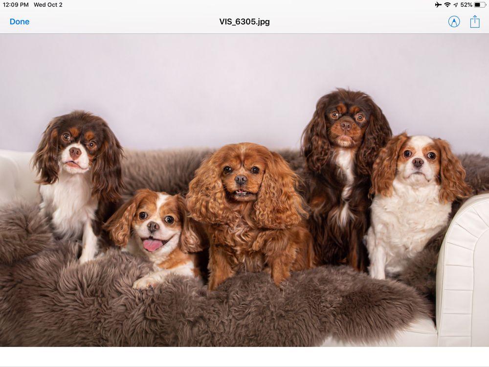 The Snooty Pooch Pet Spa
