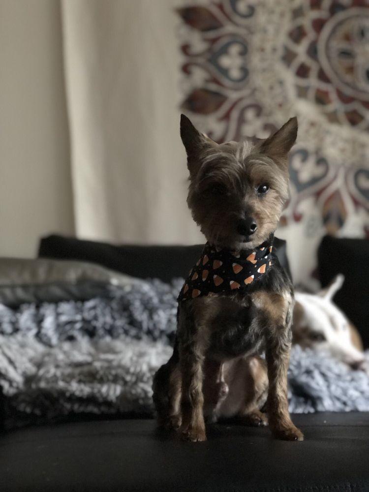 Bark in Style