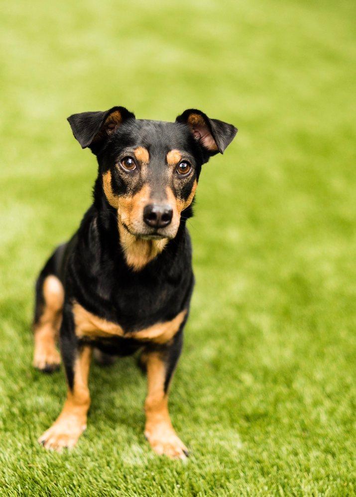 Hillsborough County Pet Resource Center: 440 N Falkenburg Rd, Tampa, FL