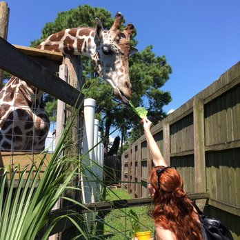 Zoo World 132 Photos 62 Reviews Zoos 9008 Front Beach Rd Panama City Fl Phone Number Last Updated December 21 2018 Yelp