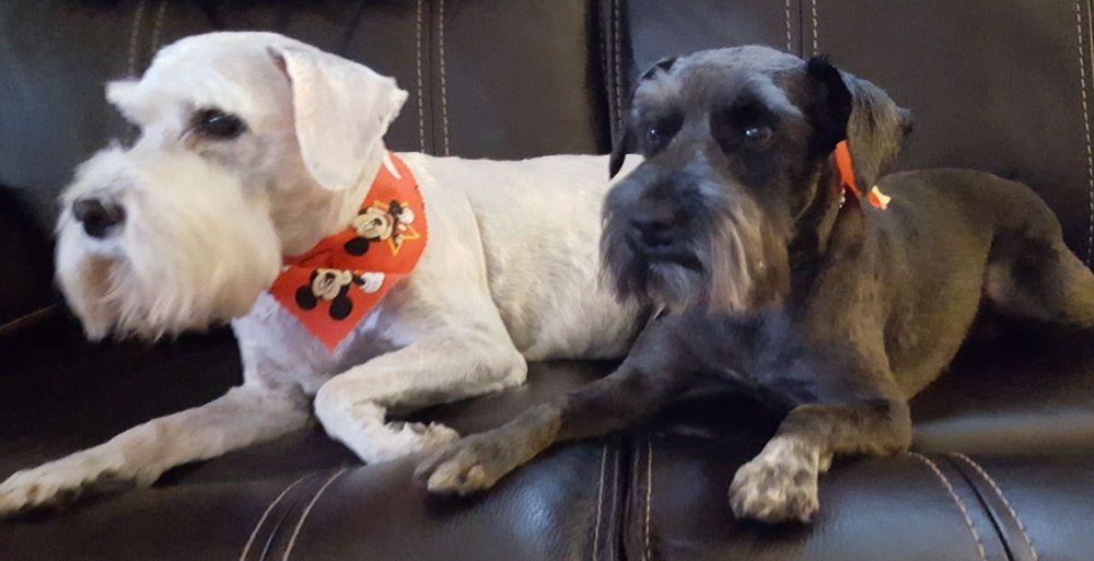 Critter Cuts 4 Paws Pet Salon: 2628 Fair Oaks Blvd, Sacramento, CA