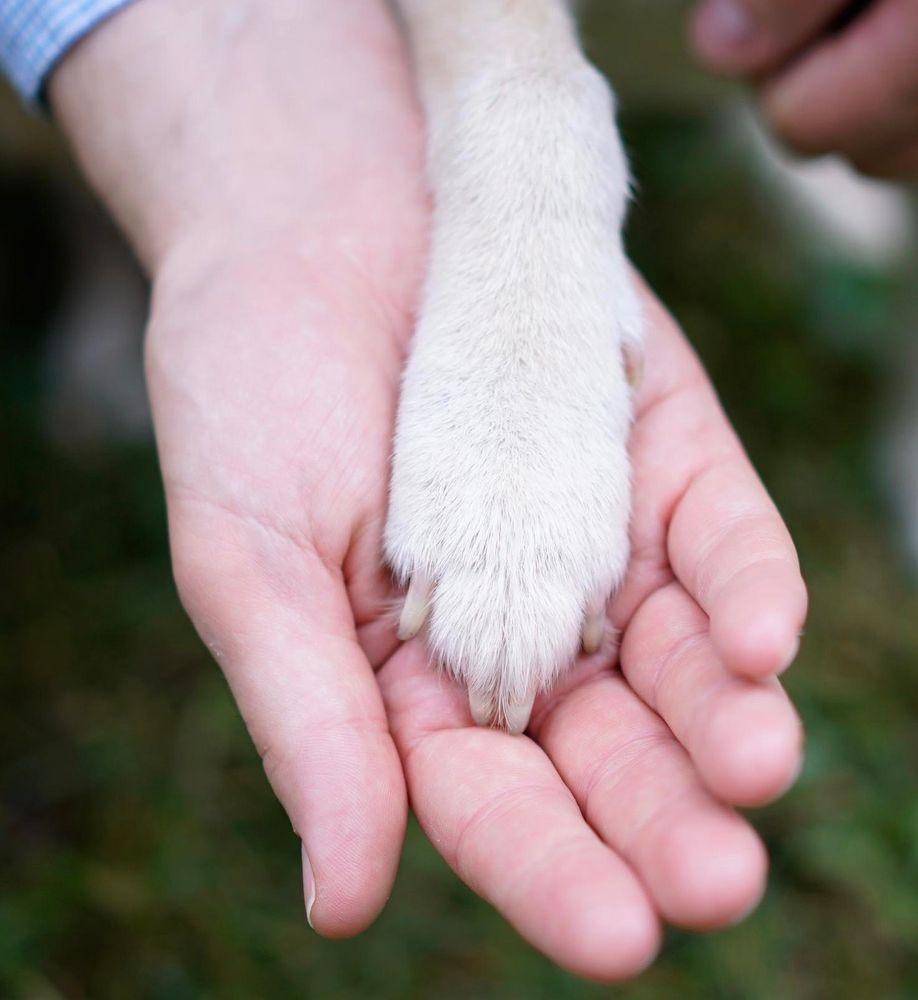 Private Veterinary Specialties: Lebanon, NJ