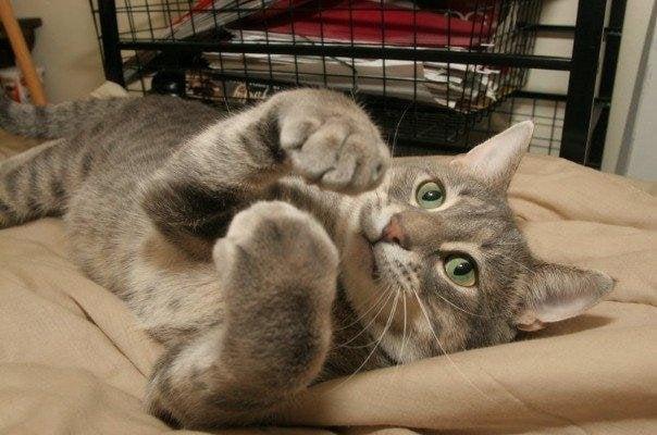 Pope County Humane Society: 17584 195th Ave, Glenwood, MN