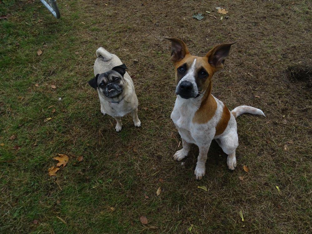 Puppy Paradis: 484 S Bdwy, Salem, NH
