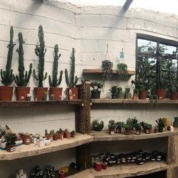 photo of urban plant life dublin republic of ireland new cactus succulent