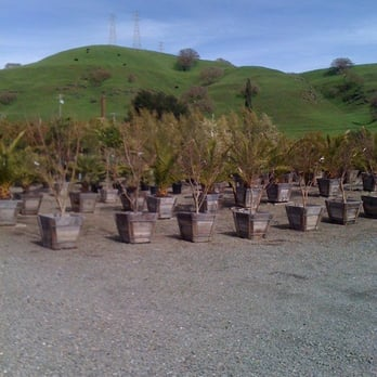 Photo Of Calaveras Nursery Sunol Ca United States They Have Many